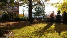 The backyard College Point, Backyard, Plants, Patio, Backyards, Plant, Planting, Planets