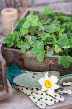 Gardening and herbs
