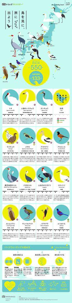 鳥を見に、旅に出よう : 旅をテーマにしたインフォグラフィックス - NAVER まとめ