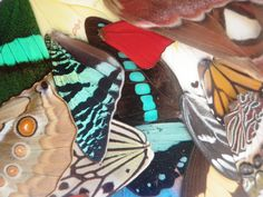 5 pairs of real butterfly wings for art and crafts by AsanaNaturalArts, $15.00