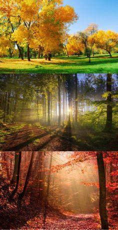 Nature, forest, autumn, light