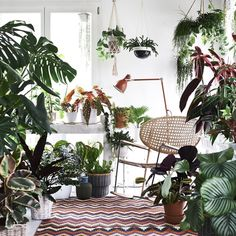 """The Jungle Collective's indoor plant """"party"""" is touring the country, and will stop in Canberra for the first time. Indoor Garden, Indoor Plants, Decoration Plante, Bohemian Decor, Houseplants, Interior Inspiration, Interior Decorating, Natural Decorating, Sweet Home"""