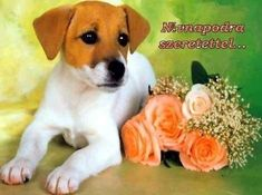Labrador Retriever, Dogs, Animals, Google Search, Labrador Retrievers, Animales, Animaux, Pet Dogs, Doggies