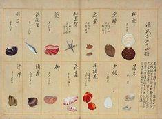 毛利梅園(1798~1851)梅園介譜