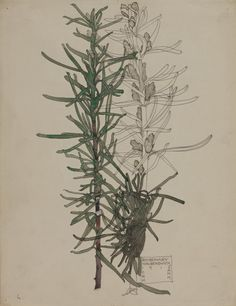 "Charles Rennie Mackintosh ""Rosemary"" 1915 (watercolour)"