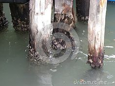 The deteriorated aspect of the wooden poles caused by the water in Venice, Italy