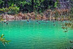 Pond with Ducks! Whitewater Preserve, Ducks, Pond, Water Pond, Garden Ponds