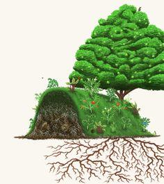 Technique inspirée par Sepp Holzer, pionnier autrichien de la permaculture La Hugelkultur Le principe de base consiste à entasser des troncs d'arbres, des bûches, des branchages, des feuilles et de…