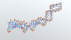 3d Dna Model, Dna Molecule, Double Helix, Forensic Science, Free
