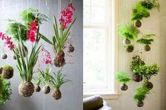 Orhidee si ferigi, string gardens. www.planthalia.ro