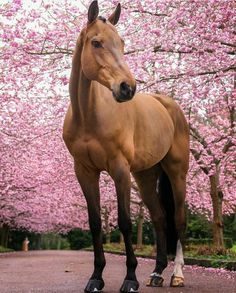Pretty tall horse with pink flowering trees.