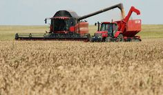 Syria issues international tender to buy 200,000 T wheat- trade