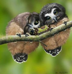 Baby saw whet owls and Saddleback caterpillar
