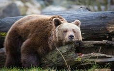 """fridaybear: """" Me today. Thank God the weekend is here! Happy Friday everyone. """""""