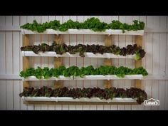 how ro make a gutter garden - Google Search