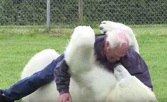 Este hombre hace algo con un oso polar que nadie más en todo el mundo puede hacer #viral