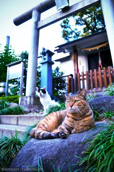 A shrine guarded by cats--perhaps it was built in their honor?