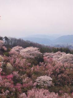 hanami yama fukushima japan.