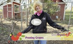 In this video, Tricia shares her tips for pruning grape vines to keep them healthy and productive. Grape Vine Pruning, Growing Horseradish, Organic Gardening, Gardening Tips, How To Make Raisins, Tighter Skin, Vine Videos, Powdery Mildew, Planting Roses
