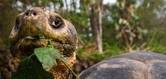 £1,249 Galapagos on a shoestring with G Adventures!