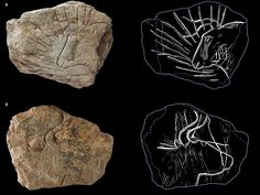 Des gravures préhistoriques datées de 14.500 ans découvertes pour la première fois en Bretagne.