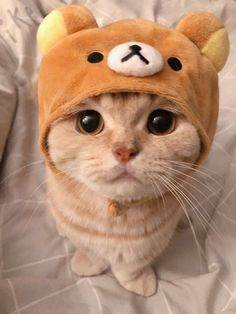 10 minutes of top funny cats - cute kittens videos compilation! Cute Baby Cats, Cute Kittens, Cute Little Animals, Cute Cats And Kittens, Cute Funny Animals, Cute Dogs, Funny Cats, Cats In Hats, Black Kittens
