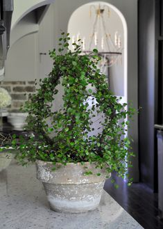 Simple Spring Decorating Ideas 2019 Simple Spring Decorating Ideas Decor Gold Designs The post Simple Spring Decorating Ideas 2019 appeared first on Floral Decor. Topiary Plants, Topiary Trees, Topiaries, Container Plants, Container Gardening, Succulent Containers, Container Flowers, Vegetable Gardening, Plant Design