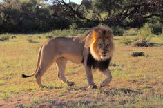 Kgalagadi Transfrontier Park Game viewing big five Kalahari desert region South Africa Nature Reserve, Travel Guide, South Africa, Beautiful Places, Deserts, Park, Travel Guide Books, Postres, Parks