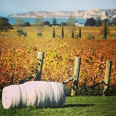 Elephant Hill Winery, Hawkes Bay, New Zealand. Cape Kidnappers is in the background. New Zealand Wine, Visit New Zealand, History Of Wine, Wine Vineyards, Wine Subscription, Kiwiana, Sauvignon Blanc, South Island, Adventure Is Out There
