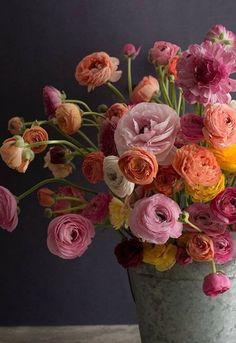 Ranunculus … Love de plantes Ranuncu – Jardin Miniature Idee – Best Garden Plants And Planting Deco Floral, Arte Floral, Beautiful Flower Arrangements, Floral Arrangements, Fresh Flowers, Beautiful Flowers, Spring Flowers, Beautiful Pictures, Design Jardin