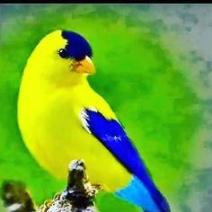 Watercolor Bird, Colorful Birds, Beautiful Birds, Cute Animals, Super Cute Animals, Adorable Animals, Birds, Pictures, Animales