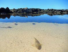 Playa Los Lagos (El Cotillo). Foto de Duncan Gray