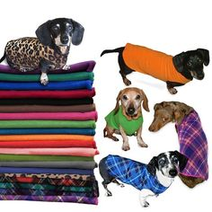 Cozy fleece sweaters designed to keep those hard to fit dachshund bodies snug and warm. Available in 11 colors and 4 sizes. Dachshund Funny, Dachshund Breed, Dachshund Sweater, Daschund, Dachshund Love, Dog Sweaters, Dachshund Clothes, Dachshund Gifts, Pullover Sweaters