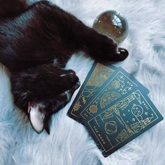 Tarot kitty