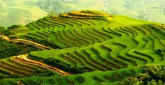 Visit the hill tribes in Sapa, Vietnam