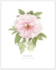 Pale Pink Peony by EllenBlonderStore on Etsy, $30.00