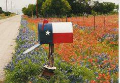 Central & South Texas WildFlowers