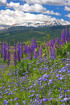 ✯ Purple Mountain Majesty