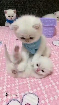 cats locvers