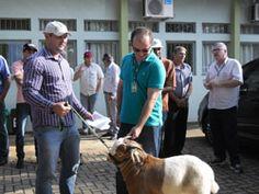 Iapar repassa caprinos para agricultores familiares