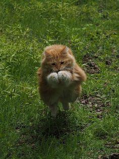 ネコの決定的瞬間をパシャリ!写真展「岩合光昭の世界ネコ歩き」が東京・大阪など7都市で開催の写真5