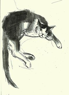 Drawing by Julian Williams http://www.fluffywhiskers.com/cat-draw.html