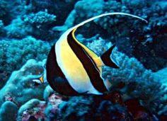 La colorazione dei pesci marini
