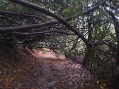 Overarching branches, Dargle River, Enniskerry - 12/10/12
