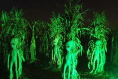 Halloween in Virginia. Find spooky and ghostly haunts, halloween events and corn mazes and pumpkin patches. Alien Halloween, Fete Halloween, Cute Halloween Costumes, Outdoor Halloween, Diy Halloween Decorations, Halloween Wreaths, Haunted Halloween, Halloween 2017, Happy Halloween