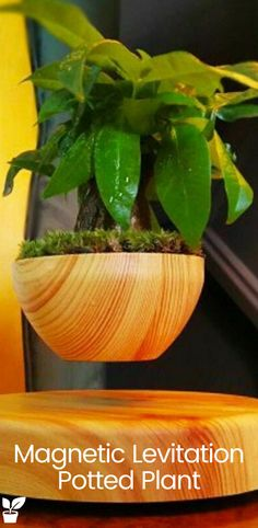 The nature vibe is all set to hit you with the presence of Levitating Bonsai Pot and spreading out the positivism in the room/hall as soon a person enters. Having a Bonsai pot motivates to work more and inheriting inner peace from nature Floating Plants, Bonsai Garden, Garden Pictures, Ornamental Grasses, Growing Tree, Garden Gifts, Small Gardens, Potted Plants, Container Gardening