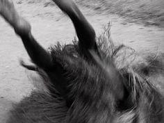 Voodoo, Horses, Animals, Auction, Animaux, Horse, Animal, Animales, Animais