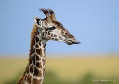 Colour Selection | David Lloyd Wildlife Photography