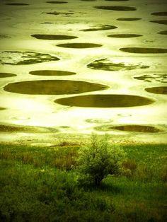 Spotted Lake, Osoyoos BC Canada