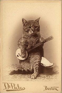 cat-banjo.jpg (594×9